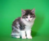 Chaton sur un fond vert photo stock image 46115949 - Enlever les puces sur un chaton ...