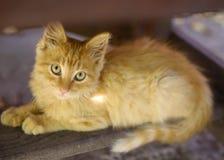 Petit chaton rouge sur le jardin d'été image stock