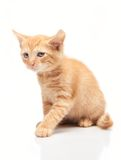 Petit chaton rouge triste sur le fond blanc Photos stock