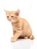 Petit chaton rouge triste sur le fond blanc photos stock