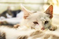 Petit chaton se trouvant sur l'un autre chaton dehors Photos libres de droits