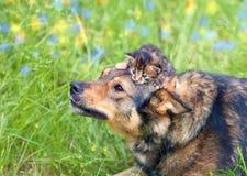 Petit chaton sur la tête de chiens Image libre de droits