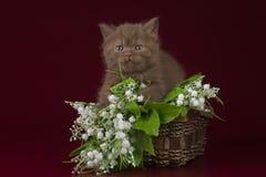 Petit chaton sur un fond d'isolement Image libre de droits