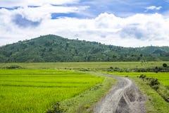 Petit chemin au gisement de riz images stock