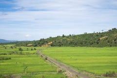 Petit chemin au gisement de riz photo libre de droits