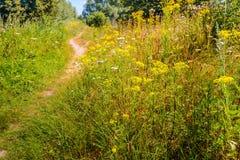 Petit chemin d'enroulement vers le haut de la colline Photographie stock libre de droits
