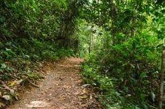 Petit chemin de terre dans la végétation intense de forêt images stock