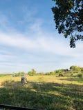 Petit cheval sur le champ vert images libres de droits