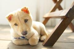Petit chien Image stock