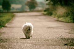 Petit chien Image libre de droits
