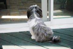 Petit chien images libres de droits