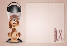 Petit chien au coiffeur Images libres de droits