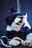 Petit chien avec la guitare Photos stock