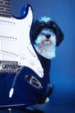 Petit chien avec la guitare Images stock