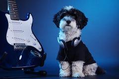 Petit chien avec les écouteurs et la guitare Photo stock