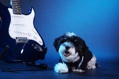 Petit chien avec les écouteurs et la guitare Images stock