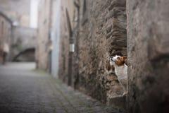 Petit chien dans la vieille ville Un animal familier dans la ville Image libre de droits