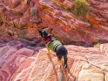 Petit chien dans le pull vert Fond coloré de grès Photos stock