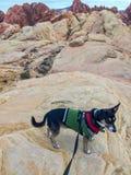 Petit chien dans le pull vert Fond coloré de grès Images stock