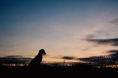 Petit chien de silhouette Photo libre de droits
