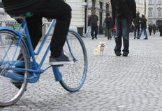 Petit chien de ville dans le trafic Image stock