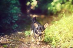 Petit chien en bois Photographie stock libre de droits