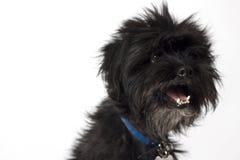 Petit chien heureux noir Photo libre de droits