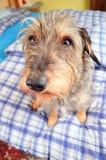 Petit chien mignon Photographie stock