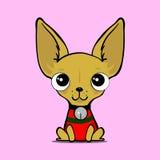 Petit chien mignon, chiwawa Images stock