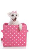 Petit chien mignon dans une boîte rose et blanche de coeur d'amour Image libre de droits