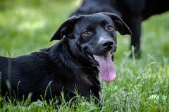 Petit chien noir et blanc photos libres de droits