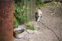Petit chien sans abri Photos stock