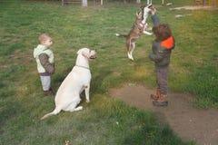 Petit chien sautant et jouant avec l'enfant tandis que grands chien et smalle Photo stock