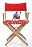 Petit chien sur une grande chaise Images libres de droits