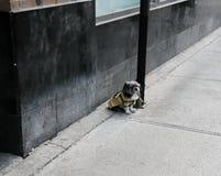 Petit chien vu attaché à un lampadaire par un trottoir vide Photo stock