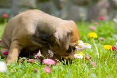 Petit chiot adorable entre les fleurs d'été Photo stock