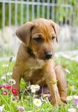 Petit chiot adorable se reposant entre les fleurs d'été Photo stock