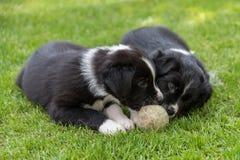 Petit chiot avec une boule Photo stock