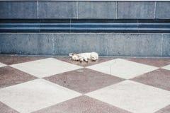 Petit chiot se reposant sur le plancher en pierre Photo stock