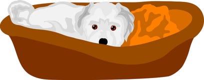 Petit chiot se situant dans le lit de camp Images stock