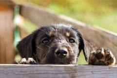 Petit chiot triste au-dessus d'une barrière en bois Chien sans abri photographie stock