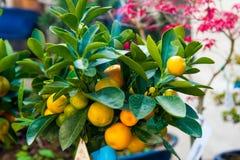 Plantation sorrento italie de citron photos libres de droits image 22026708 - Citronnier feuilles jaunes ...