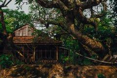 Petit cottage en bois dans une forêt tropicale Image libre de droits