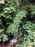 Petit courant dans une forêt de l'Himalaya Images stock