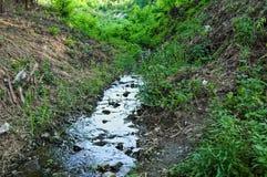 Petit courant de l'eau de montagne, traversant des bois Photographie stock