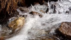 Petit courant de rivière au printemps banque de vidéos