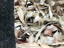 Petit crabe images libres de droits