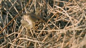 Petit crabe dans l'herbe clips vidéos