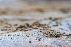 Petit crabe dans le sable photo stock