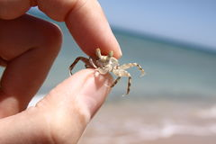 Petit crabe dans ma main Photographie stock